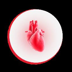 ศัลยแพทย์หัวใจ